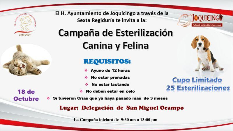 CAMPAÑA DE ESTERILIZACIÓN SAN MIGUEL OCAMPO